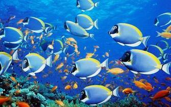 Aquarium Live Wallpapers   screenshot