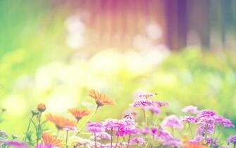 Spring Flowers Background wallpaper 2560x1600 83366