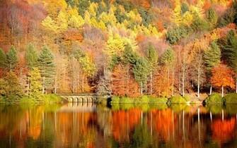 Download Fall Wallpaper wallpaper Fall In Colors