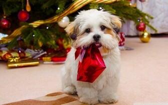 cute dog christmas wallpapers HD Desktop Wallpapers