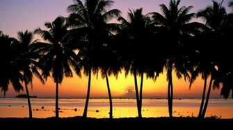 Download Wallpaper Palm Trees at Sunset Cook Islands 1920 x 1080