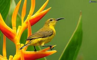 Image result for colorful birds Boids of Color Birds wallpaper