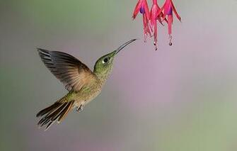 flowers for flower lovers Flowers and humming birds pictures