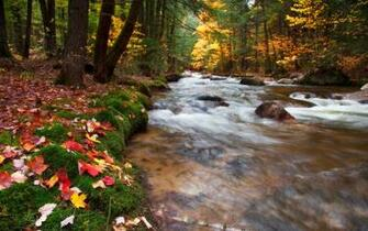 Babbling Brook United States New Hampshire White Mountains