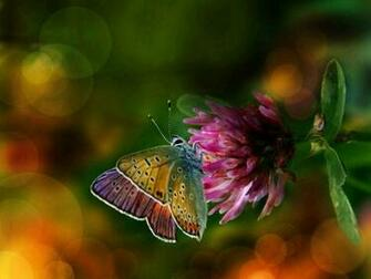 Colorful Wings Flower Butterfly Background Wallpapers Butterfly