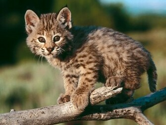 Baby Animal Wallpapers Baby Animal Pictures
