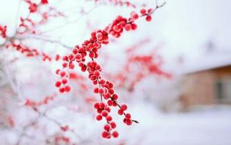 Winter Nature Wallpapers High Quality Long Wallpapers 1680x1050