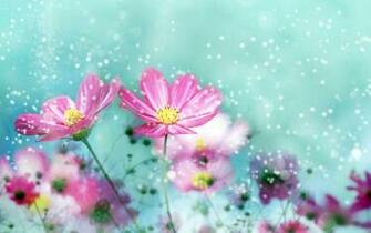 cute flower backgrounds   AmusingFuncom Pictures and Graphics for