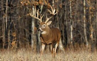 Deer Desktop Wallpaper Deer HD Wallpaper