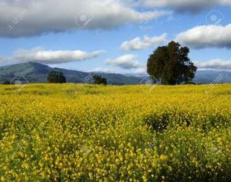 A Placid Spring Country Landscape With Yellow Flowers In Front