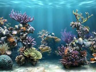 Aquaculture Wallpaper My Style Coral reef aquarium Aquarium