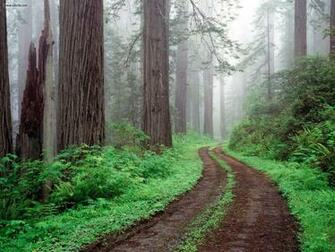 Nature Redwood National Park California picture nr 23251