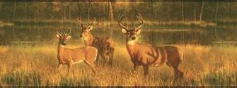 Deer Buck Wallpaper Border Lake Scene Wallpaper Hunting Border