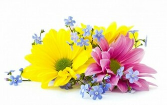 Flower Background Images wallpapers55com   Best Wallpapers for