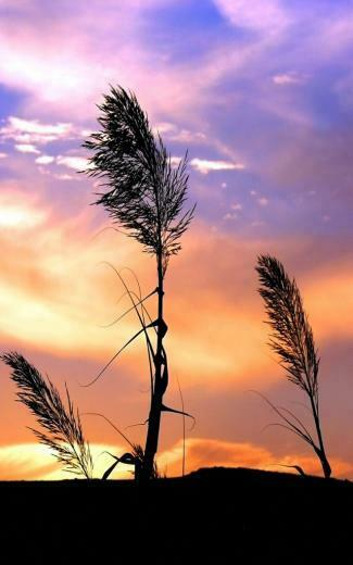 Nature Wallpaper For Android Cell Phone