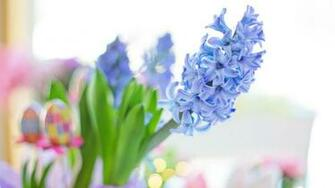 Easter 2020 Blue Hyacinth Flower Spring Wallpaper File HD