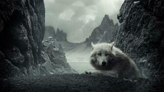 Wolf Wolves HD Wallpaper 2675