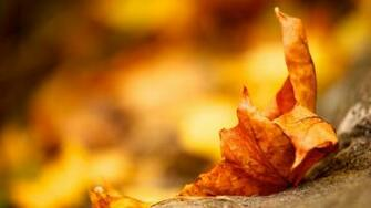 Fall Leaf Wallpaper