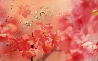 Wallpaper   Flower wallpaper   Cg Flowers wallpaper