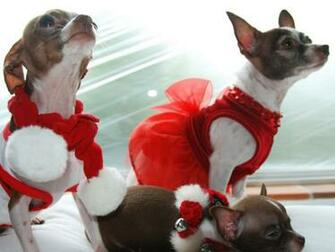 Cute Animal Christmas Wallpaper 8756 Hd Wallpapers in Celebrations