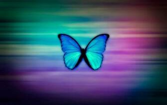 Colorful Butterfly HD Wallpapers Real Artistic
