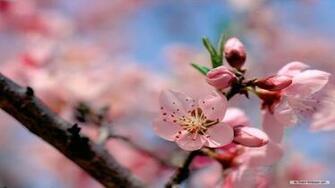 Wallpaper Flower wallpaper Spring Flower wallpaper