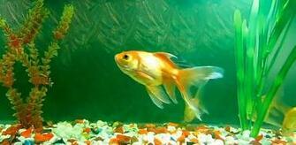 green aquarium live wallpaper green aquarium live wallpaper decorates