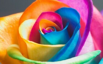 flower wallpaper colorful flower desktop wallpaper colorful flower