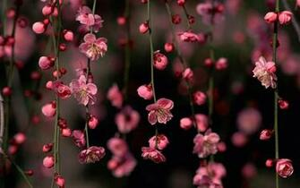 Spring Flowers Backgrounds Desktop