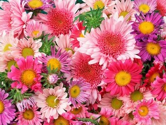 Download High quality Flowers Wallpaper Num 147 1600 x 1200