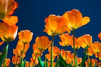 Orange Spring Flowers Wallpapers Spring Themes Pinterest