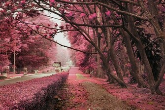 Pink Nature wallpaper   ForWallpapercom