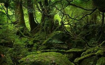 Moss Covered Stones Trees HD Nature Wallpapers Desktop Wallpapers