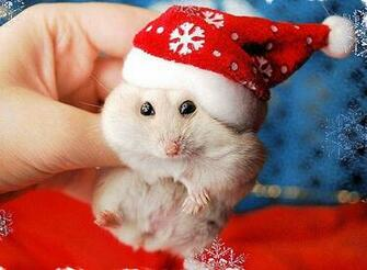 Christmas Animals Wallpaper