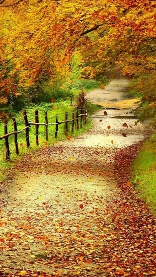 Beautiful Path Nature iPhone Wallpaper