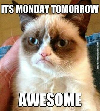 Grumpy is the only one that loves mondays Fun Cat Pictures