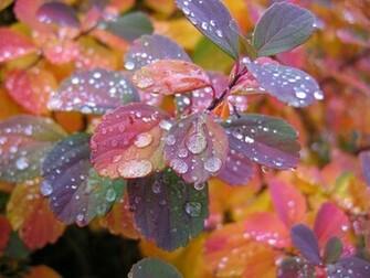 Beautiful Wallpapers Beautiful Rain Wallpapers for your desktop