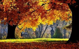 cute fall desktop wallpaper
