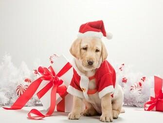 christmas dog wallpaper 2015   Grasscloth Wallpaper