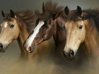 Beautiful Wallpapers wild horses wallpapers