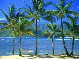 Palm Tree Desktop Wallpapers