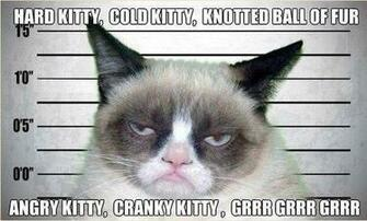 Grumpy Cats Song