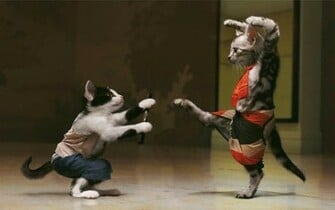 wallpapers Funny Cats Fight Wallpaper