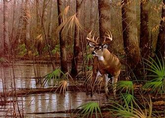 Download beautiful deer pictures high quality