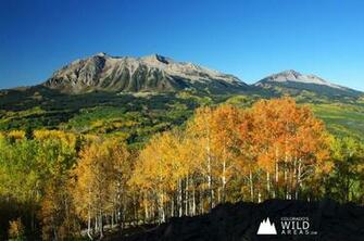 Colorados Fall Colors Wallpaper Colorados Wild Areas