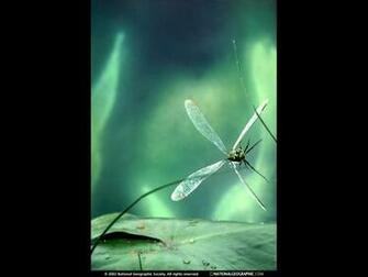 Cool Wallpapers dragonfly backgrounds