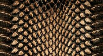 1700x934px Reptile Skin Wallpaper