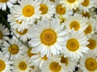 Flower Background tumblr wallpaper wallpaper hd background desktop
