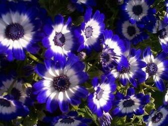 Flowers Wallpapers DaerTube