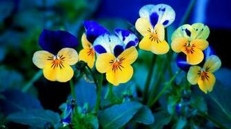 Flowers wallpaper   832342